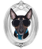 Cane nel telaio fotografia stock libera da diritti