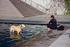 Cane nell'acqua Fotografia Stock Libera da Diritti