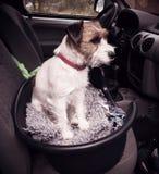 Cane nell'automobile Immagini Stock