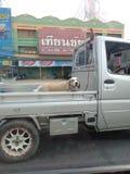 Cane nell'automobile fotografia stock