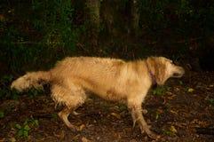 Cane nell'azione - cane commovente fotografia stock libera da diritti