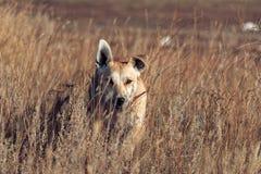 Cane nell'erba fotografie stock libere da diritti
