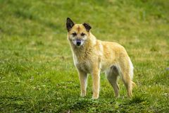 Cane nell'erba Fotografia Stock Libera da Diritti