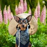 Cane nell'immagine di un agricoltore, un orticoltore, un coltivatore del fiore Fotografia Stock