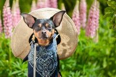 Cane nell'immagine di un agricoltore, un orticoltore, un coltivatore del fiore Fotografia Stock Libera da Diritti