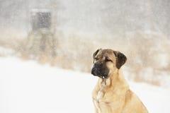 Cane nell'inverno Fotografie Stock