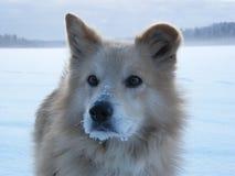 Cane nell'inverno Immagini Stock Libere da Diritti