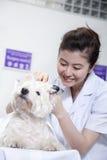 Cane nell'ufficio del veterinario fotografia stock libera da diritti