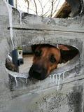 Cane nella casa Immagine Stock Libera da Diritti