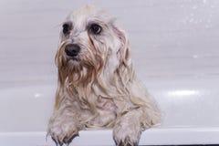 Cane nella doccia fotografia stock