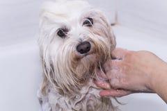 Cane nella doccia fotografia stock libera da diritti
