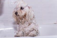 Cane nella doccia immagini stock