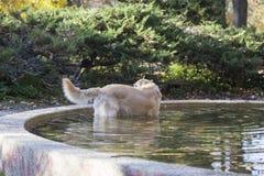 Cane nella fontana Fotografia Stock Libera da Diritti