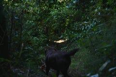 Cane nella foresta immagini stock