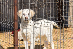 Cane nella gabbia Fotografia Stock