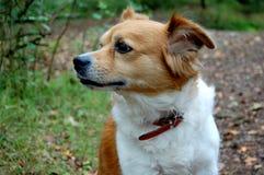 Cane nella natura Fotografia Stock