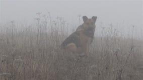 Cane nella nebbia stock footage