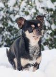 Cane nella neve Fotografia Stock Libera da Diritti