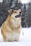 Cane nella neve Fotografie Stock