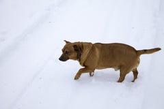 Cane nella neve Immagini Stock Libere da Diritti