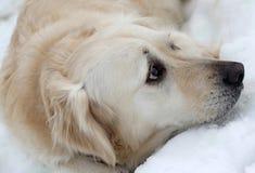 Cane nella neve di inverno Immagine Stock Libera da Diritti