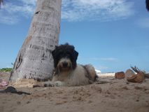 Cane nella spiaggia Fotografia Stock