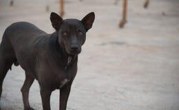 Cane nero immagini stock libere da diritti