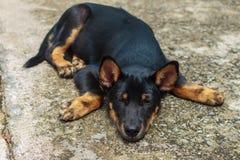Cane nero che aspetta il proprietario per scampare solitudine, immagine stock