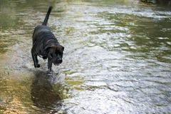 Cane nero che passa un'insenatura fotografie stock