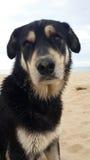 Cane nero che si siede sulla spiaggia Fotografie Stock Libere da Diritti