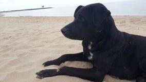 Cane nero che si siede sulla spiaggia Fotografia Stock Libera da Diritti