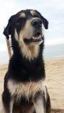 Cane nero che si siede sulla spiaggia Immagini Stock Libere da Diritti