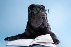 Cane nero di shar-pei con il libro di lettura di vetro Fotografia Stock