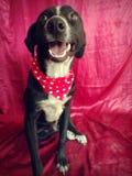 Cane nero felice fotografia stock libera da diritti