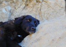 Cane nero peloso con le orecchie lunghe che si trovano sulla strada che riposa e che esamina la macchina fotografica Fotografie Stock