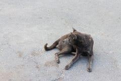 Cane nero selvaggio che si siede sulla via Fotografia Stock Libera da Diritti