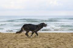 Cane nero sulla spiaggia fotografia stock libera da diritti