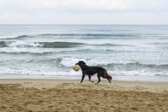 Cane nero sulla spiaggia immagine stock libera da diritti