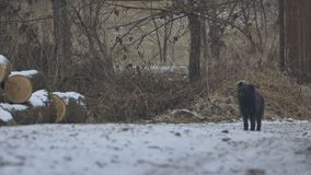 Cane nero sulla strada archivi video