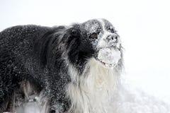 Cane in neve in Boemia fotografia stock libera da diritti