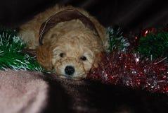 Cane, nuovo anno fotografia stock libera da diritti