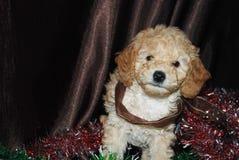 Cane, nuovo anno fotografie stock libere da diritti