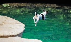 Cane olimpico dell'operatore subacqueo Fotografia Stock Libera da Diritti