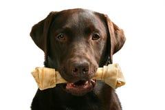 Cane + osso = animale domestico felice fotografie stock