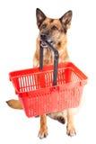 Cane pastore tedesco isolato sopra priorità bassa bianca fotografia stock libera da diritti