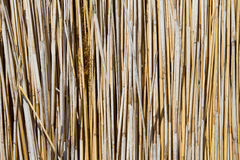 Cane Stock Photography
