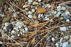 Cane and pebble Royalty Free Stock Images