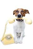 Cane per mezzo di un telefono giallo Immagine Stock