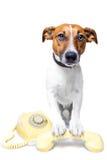 Cane per mezzo di un telefono giallo Fotografie Stock Libere da Diritti