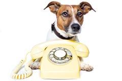 Cane per mezzo di un telefono giallo Fotografia Stock